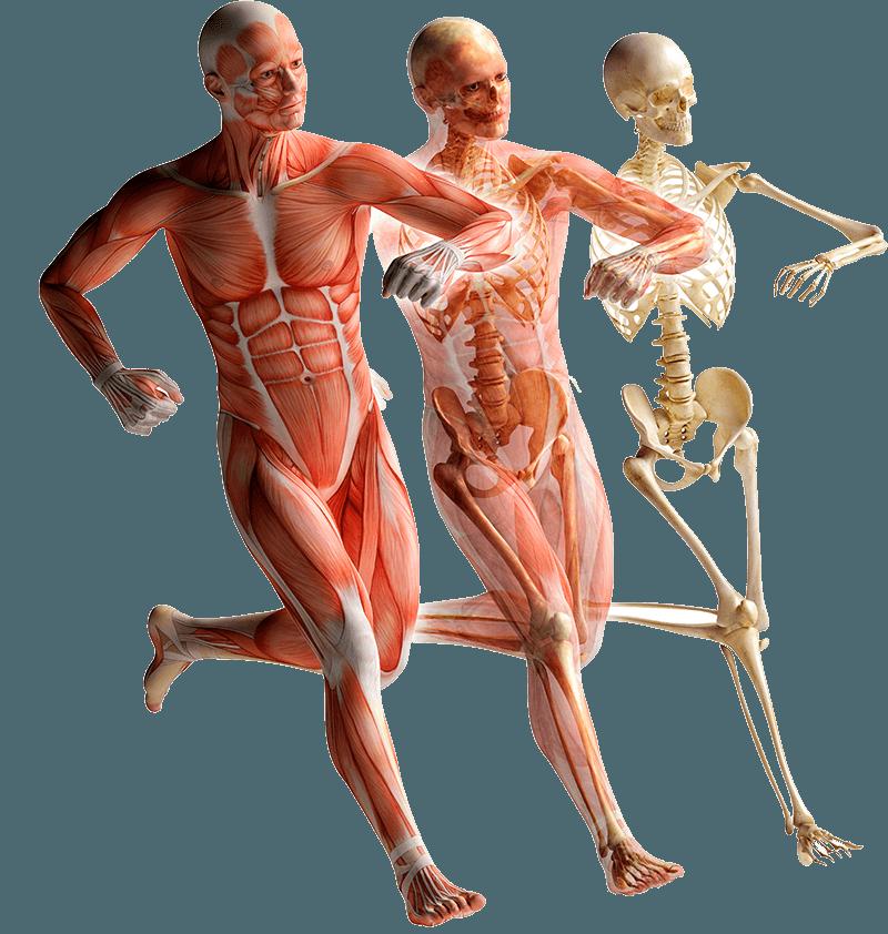 Refuerzo Muscular - INICIO - Refuerzo Muscular